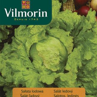 Salát ledový (křehký) Balmoral (Vilmorin)