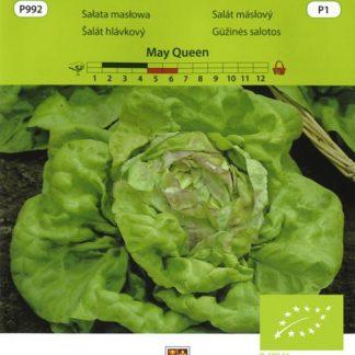 Salát máslový May Queen (Vilmorin)