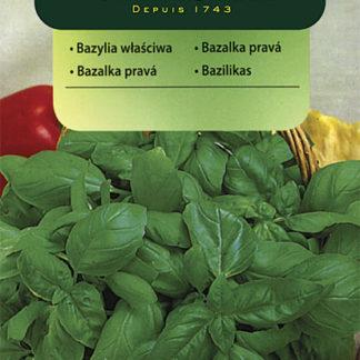 Bazalka pravá - classic (Vilmorin)