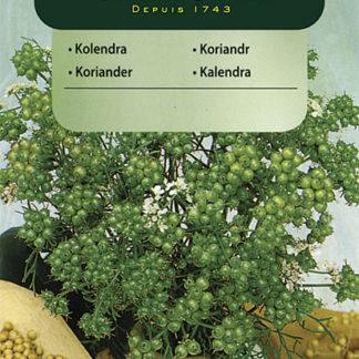 Koriandr setý (Vilmorin)