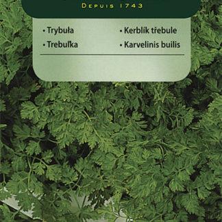 Kerblík třebule (Vilmorin)