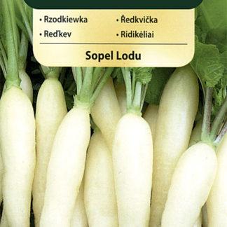 Ředkvička Sopel Lodu - bílá (Vilmorin)