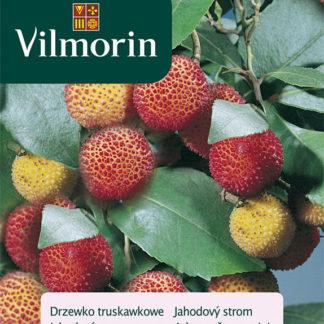 Jahodový strom (Vilmorin)