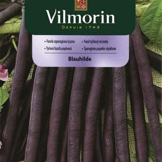 Fazol tyčkový na lusky Blauhilde - fialový (Vilmorin)