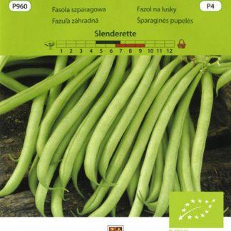 Fazol na lusky Slenderette BIO - zelený (Vilmorin)
