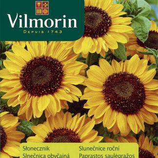 Slunečnice roční Sonja (Vilmorin)