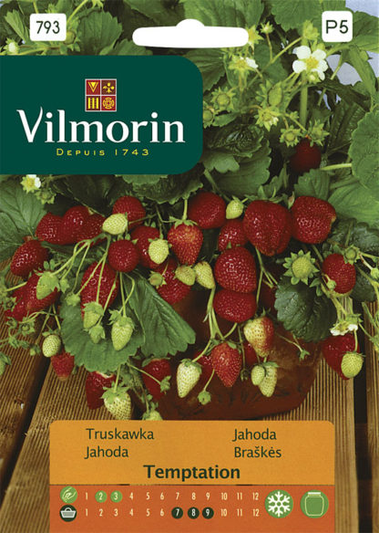Jahoda Temptation (Vilmorin)