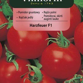 Rajče polní i skleníkové Harzfeuer F1 (Vilmorin)