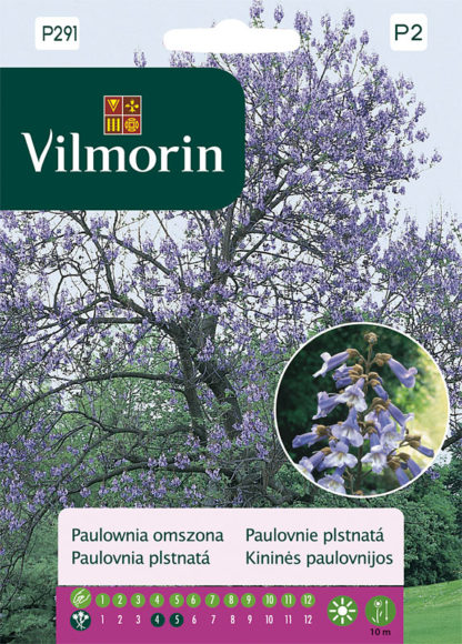 Paulovnie plstnatá (Vilmorin)