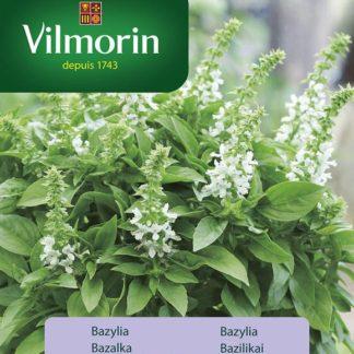 Bazalka Floral Spires (Vilmorin)
