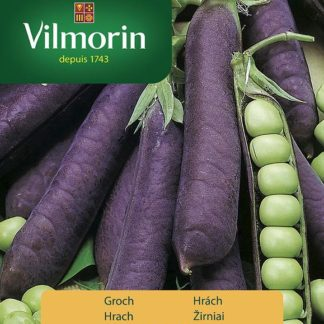 Hrách Blauwschokker - fialové lusky (Vilmorin)