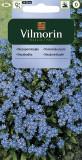 Pomněnka lesní (modrá)