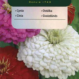 Ostálka sličná - směs (Vilmorin)