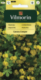 Lichořeřišnice nízká kanárská Canary Creeper (žlutá)