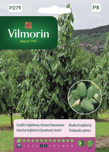 Muďoul trojlaločný - banánový strom (Vilmorin)