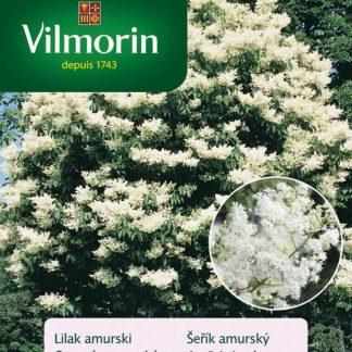Šeřík amurský (Vilmorin)