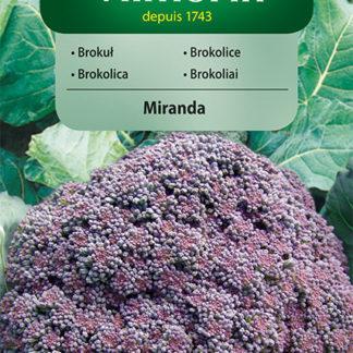 Brokolice Miranda - fialová (Vilmorin)