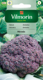 Brokolice Miranda (fialová)