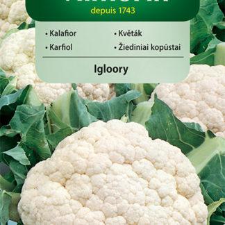 Květák Igloory (Vilmorin)