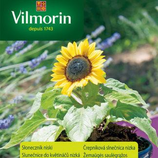 Slunečnice do květináčů (nízká) Suntastic F1 (Vilmorin)