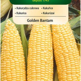 Kukuřice Golden Bantam (Vilmorin)