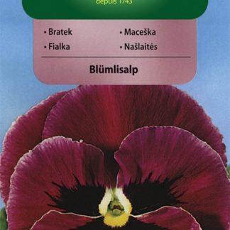 Maceška velkokvětá švýcarská Blümlisalp - purpurová (Vilmorin)
