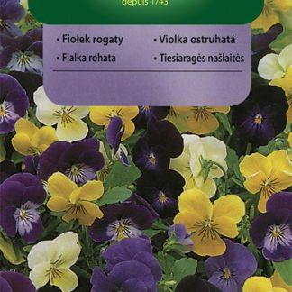 Violka ostruhatá - směs (Vilmorin)