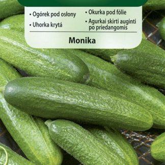 Okurka skleníková Monika (Vilmorin)