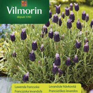 Levandule hlávkovitá Bleu Provence (Vilmorin)