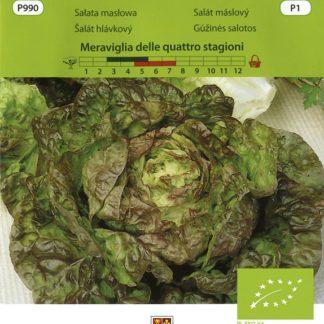 Salát máslový Meraviglia delle quattro stagioni BIO (Vilmorin)