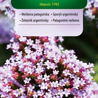 Sporýš argentinský - fialový (Vilmorin)