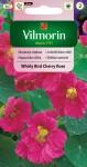 Lichořeřišnice větší Whirly Bird Cherry Rose - růžová (Vilmorin)