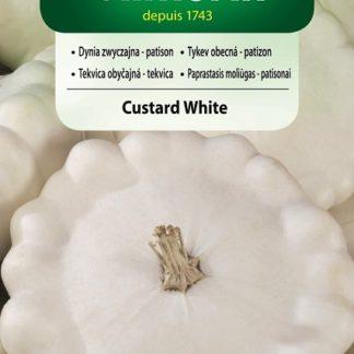 Patizon (tykev obecná) Custard White (Vilmorin)