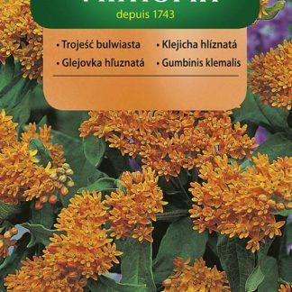 Klejicha hlíznatá - oranžová (Vilmorin)