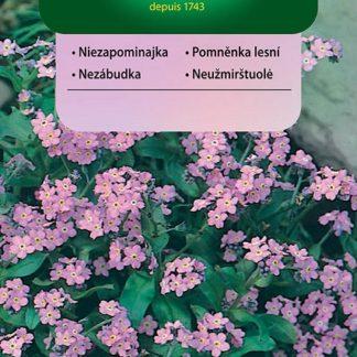 Pomněnka lesní - růžová (Vilmorin)