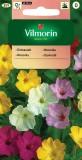 Nocenka zahradní (směs)