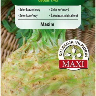 Celer kořenový Maxim (Vilmorin)