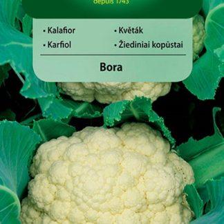 Květák Bora (Vilmorin)