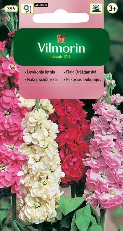 Fiala drážďanská - směs (Vilmorin)