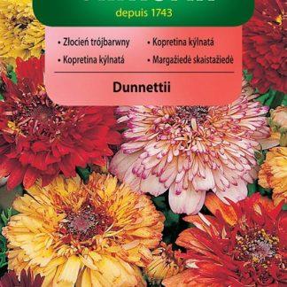Kopretina kýlnatá Dunnettii - směs (Vilmorin)