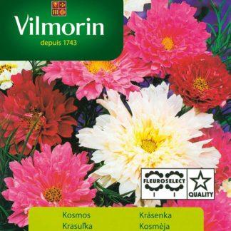 Krásenka Double Click - směs (Vilmorin)