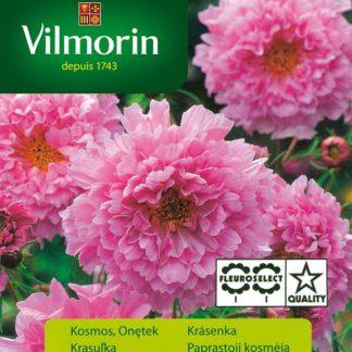 Krásenka Rose Bonbon - růžová (Vilmorin)