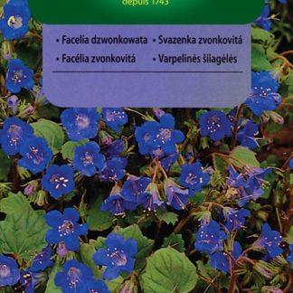 Svazenka zvonkovitá - modrá (Vilmorin)