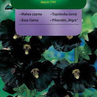 Topolovka černá (Vilmorin)