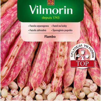 Fazol na lusky Flambo - červeně skvrnitý (Vilmorin)