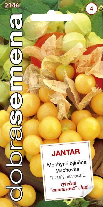 Mochyně ojíněná Jantar - ananasová (Dobrásemena)