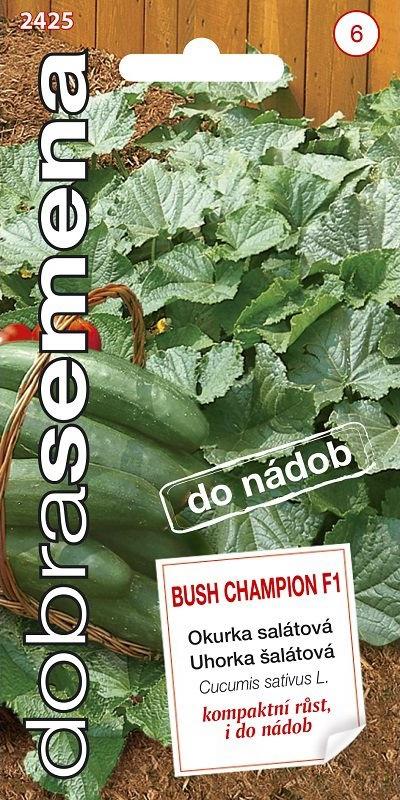 Okurka salátová Bush Champion F1 - do nádob (Dobrasemena)