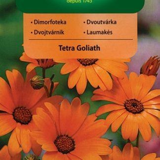 Dvoutvárka oranžová Tetra Goliath (Vilmorin)