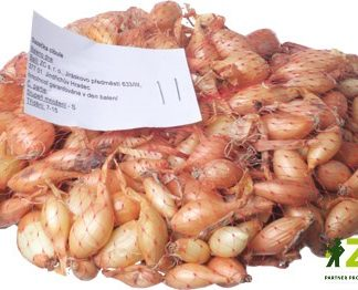 Cibule sazečka Sturon - žlutá, 250 g (ZC)
