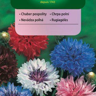 Chrpa polní - směs (Vilmorin)